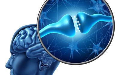 Nadwaga a mózg?
